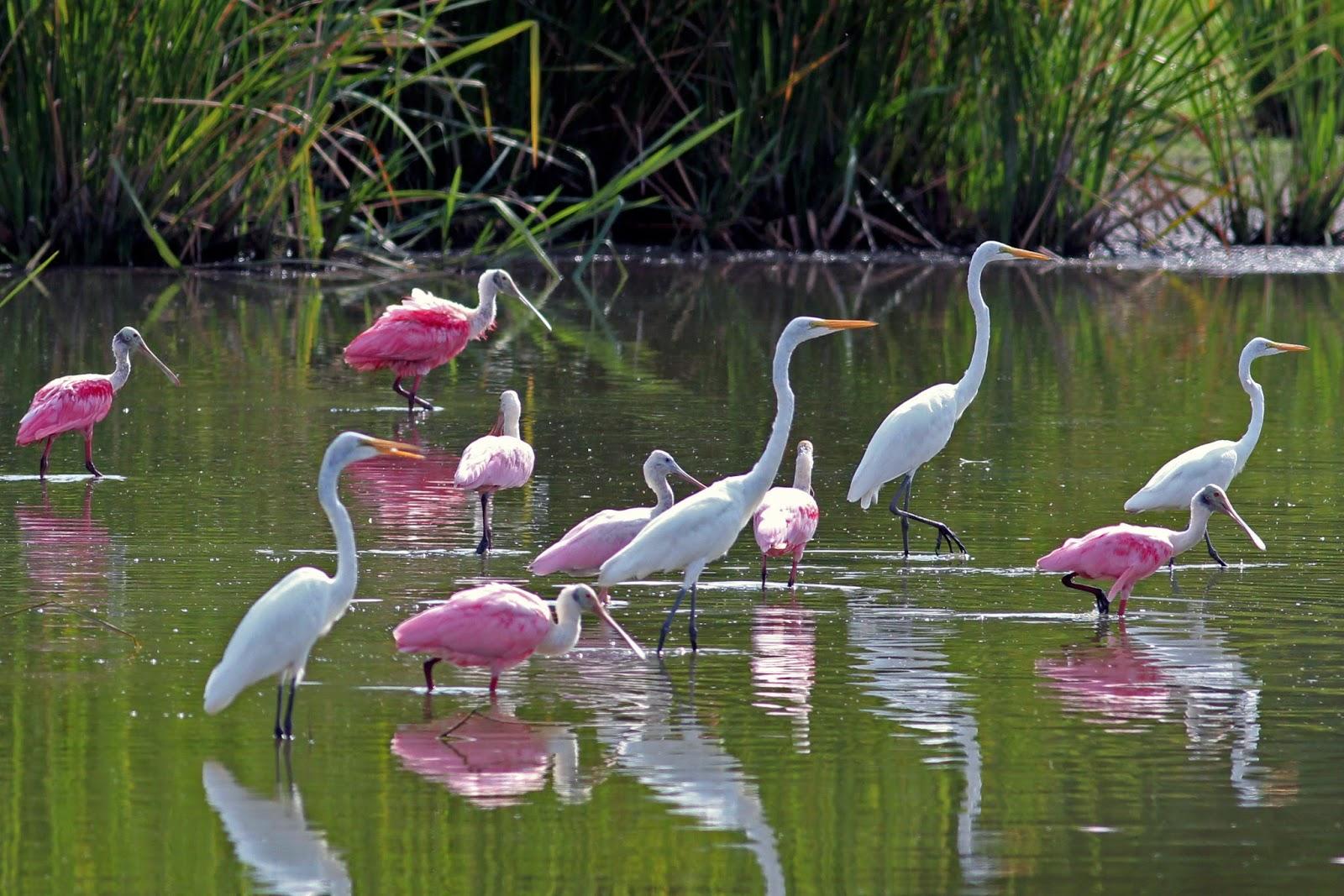 Golfo Dulce A Birder's Paradise