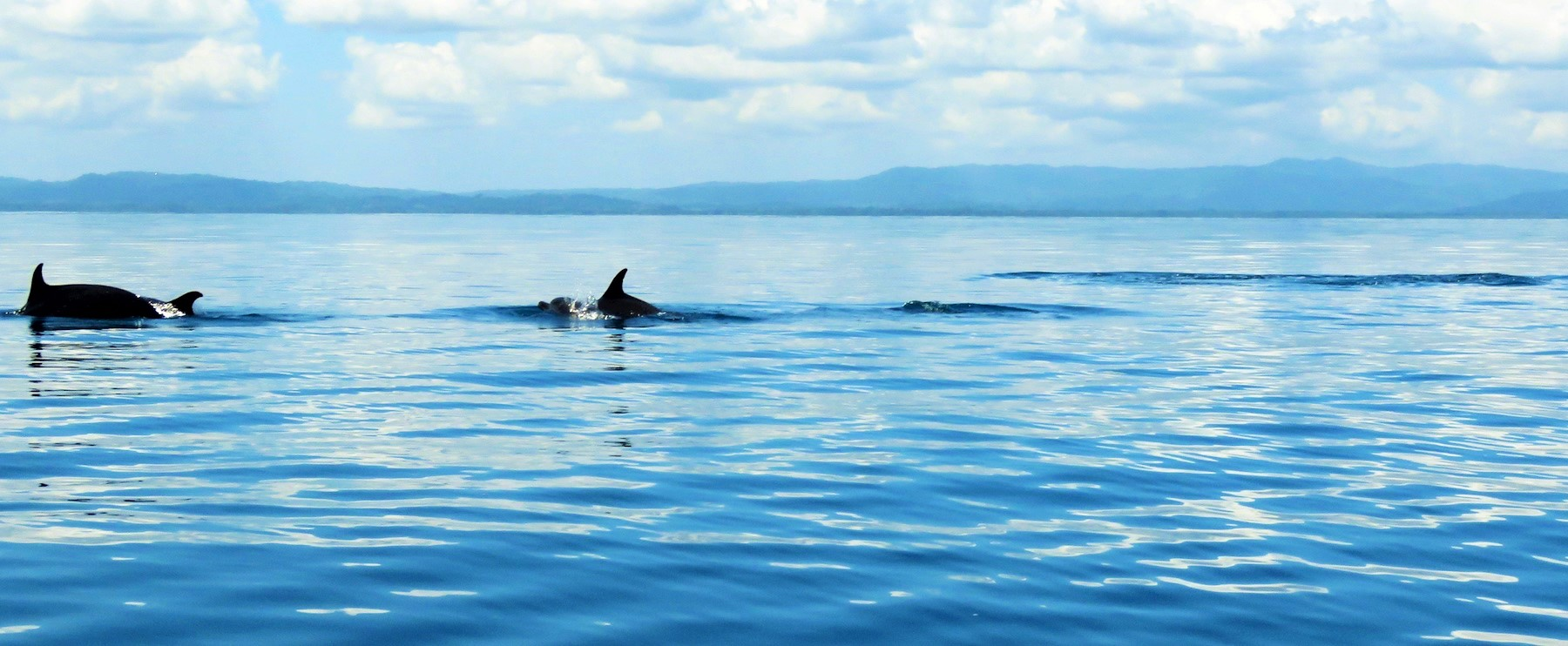 whales and dolphins observations