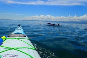 tropical sea kayaking vacations in costa rica (12)