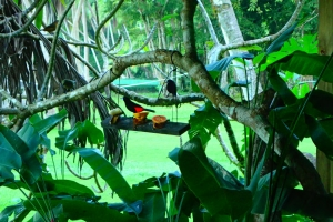 tropical sea kayaking vacations in costa rica (14)