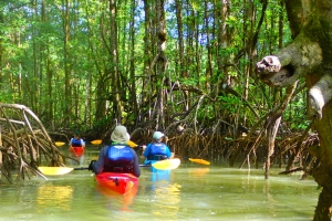 tropical sea kayaking vacations in costa rica (6)