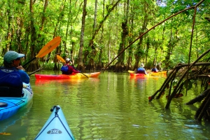 tropical sea kayaking vacations in costa rica (7)