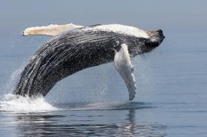 tropical sea kayaking whale